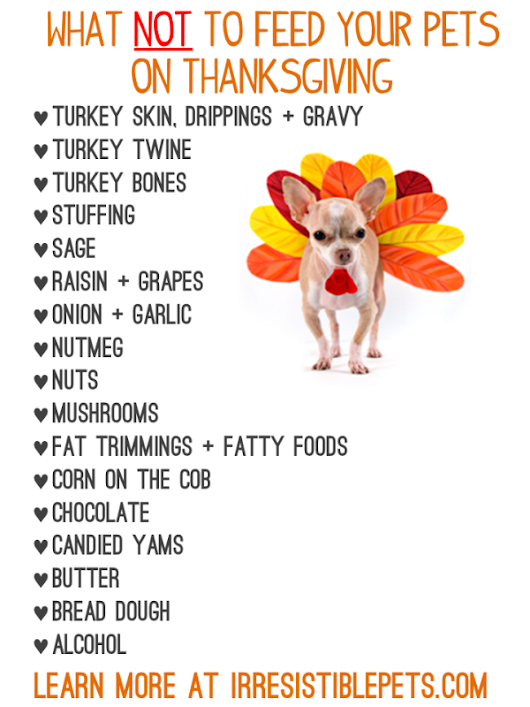 Tips for Keeping Our Pets Safe on Thanksgiving – Off Road Paws