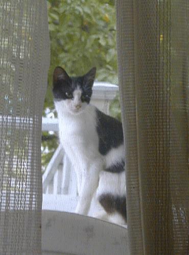 AthenaMaus watching from outside