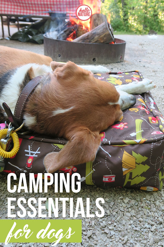 Camping Essentials for Dogs - Hello Nature