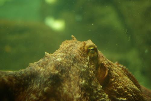 2009-08-26 Undersea Gardens (7)