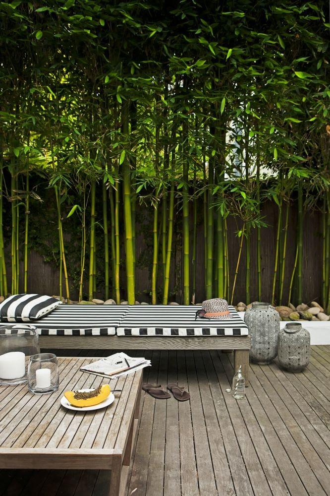 Trees For A Contemporary Garden Olander Garden Design