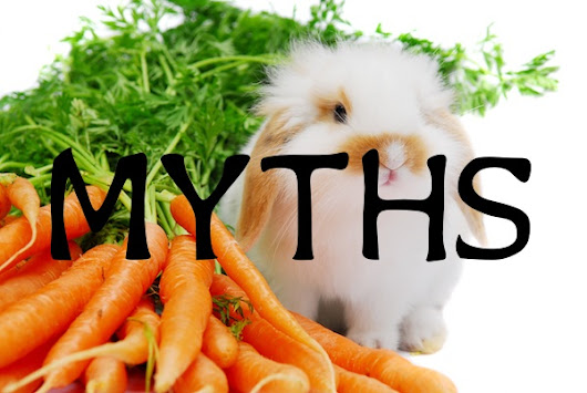 5 myths about rabbits - don't make these mistakes!