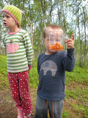 and we find a little more cloudberries too