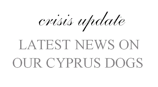 Cyprus crisis - latest update
