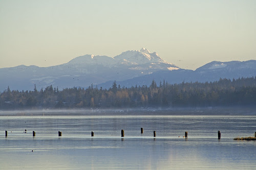 mt arrowsmith behind gartley bay