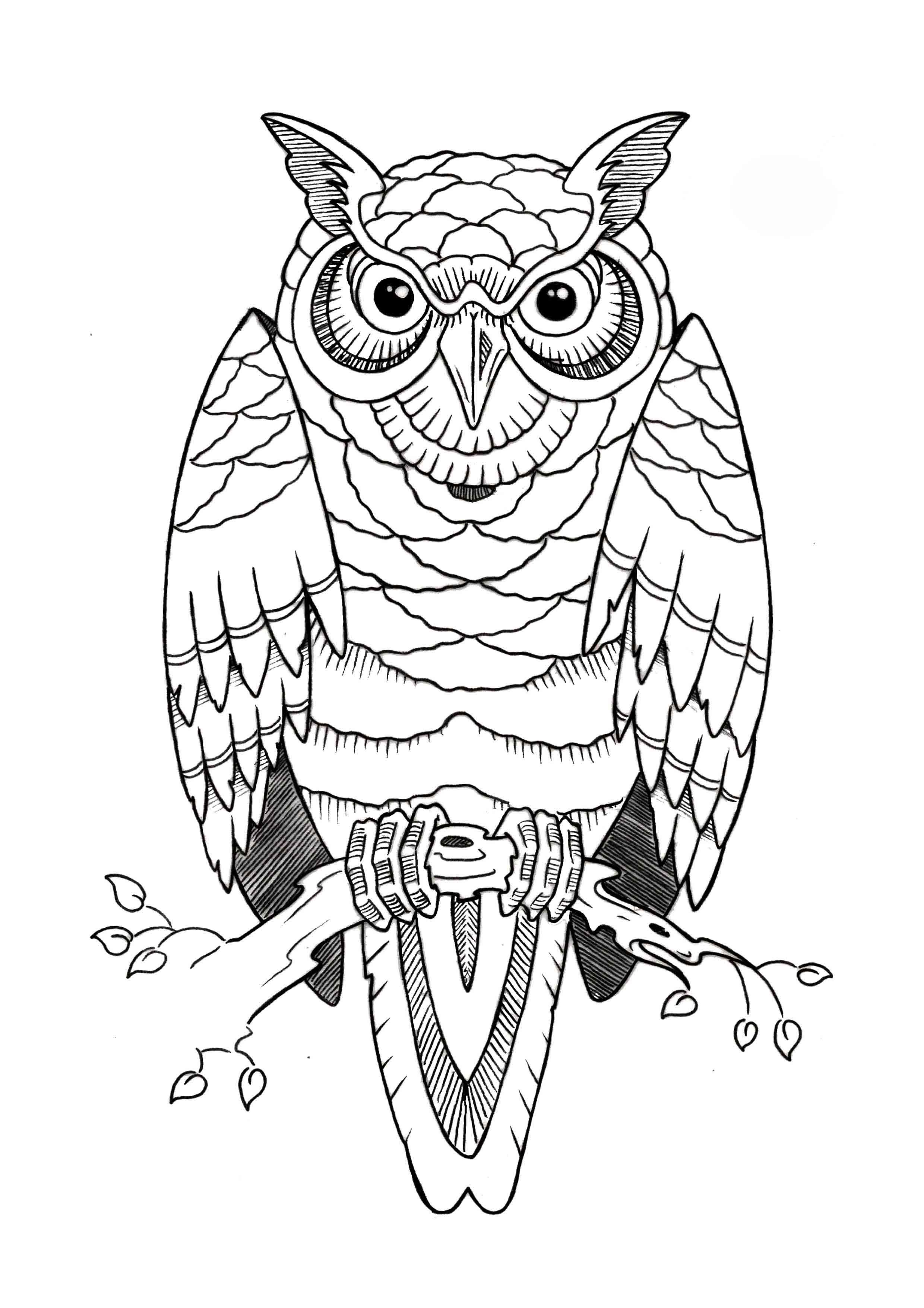 Angry Owl Tattoo Outline Crazywidowinfo