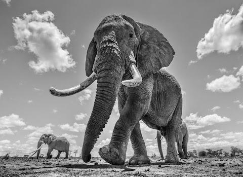 Photographer Shoots Fine Art Photos of Africa's Majestic Elephants