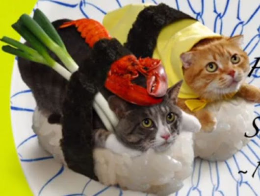 Pictures: Confused Cats Dressed as Sushi in Bizzare Promotion