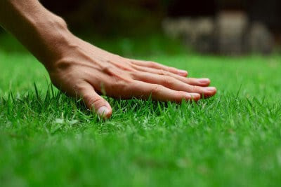 Early Spring Lawn Care Guide and Tips
