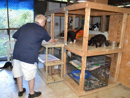 Volunteers help feed and care for feral cats on a colony