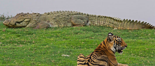 Bardia Wildlife Tour|Bardia National Park tour Package