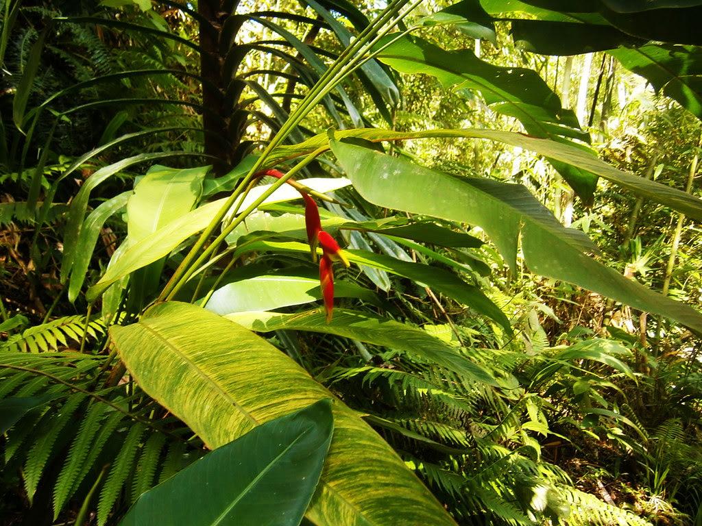 flower in Lumondo Falls in Alegria, Surigao del Norte PHILIPPINES