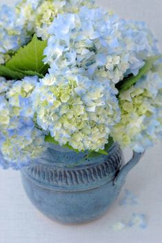 blues... for Hydrangeas... these make beautiful arrangements fresh or dried!