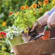 4 Spring Clean Up Tips for Your Landscape - Rhine Landscaping