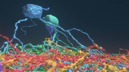 A Quarter Million Gamers Helped Build This Incredibly Detailed Map of the Brain