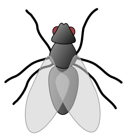fly 01