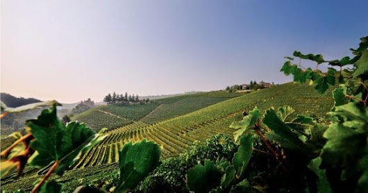The Ancient King Of Wine Barolo Faces Modern Challenges
