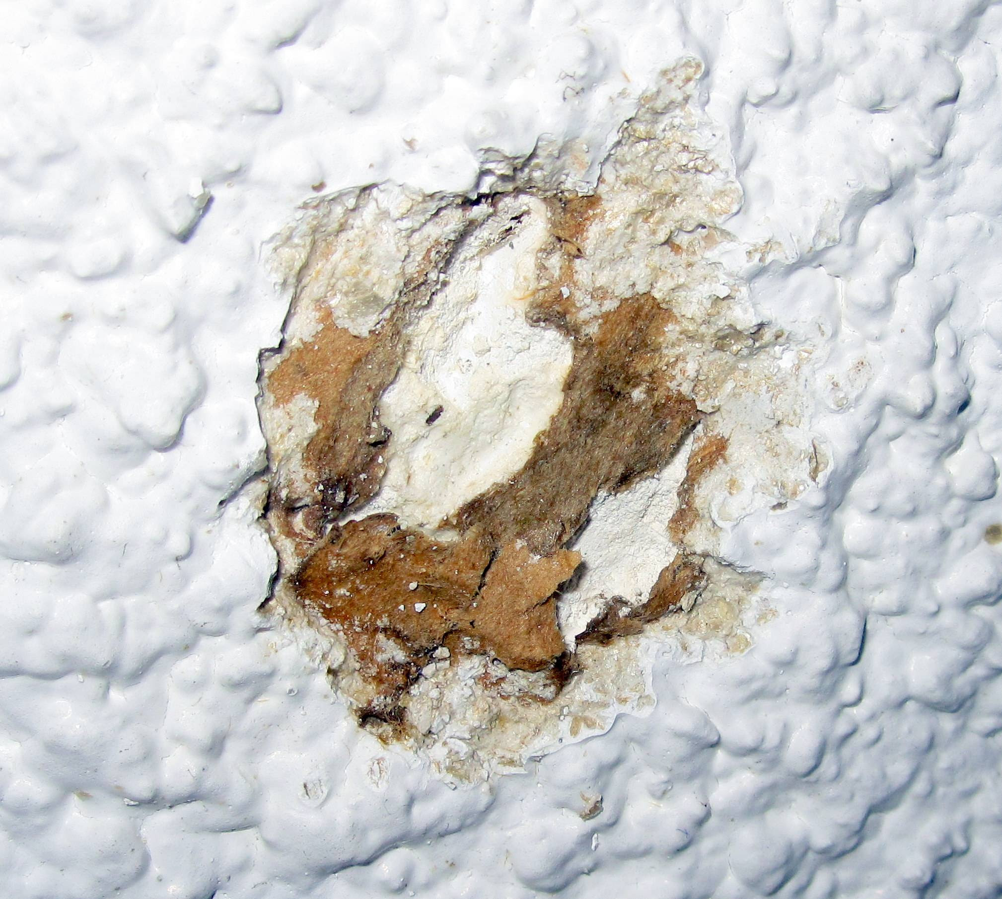 What Do Asbestos Containing Ceiling Tiles Look Like Ceiling
