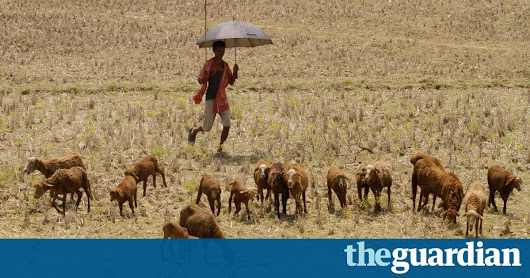 Climate change to cause humid heatwaves that will kill even healthy people | Environment | The Guardian