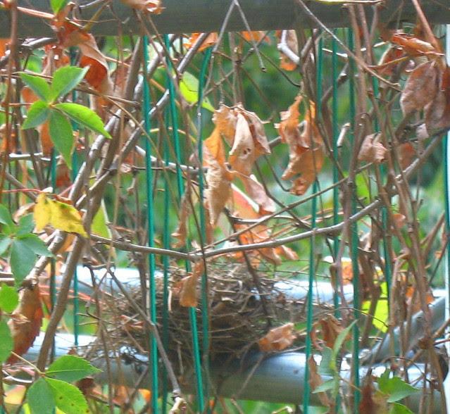 abcwed nestswngst
