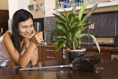 The Importance of House Plants for People