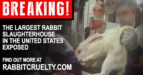 Exposed! Cruelty at America's Largest Rabbit Slaughterhouse