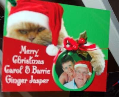 Ginger-Jasper