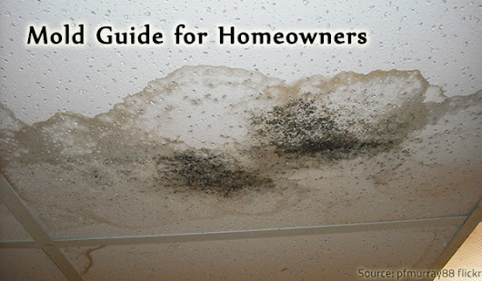 Mold Guide for Homeowners