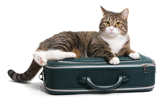 Cozee Pet Sitters — Why cats don't travel well. Wouldn't it be sweet...