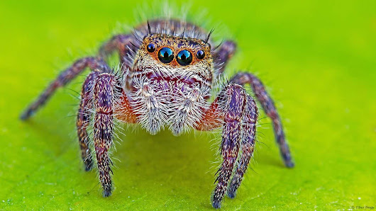 Analysis | Spiders could theoretically eat every human on Earth in one year