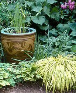 Easy water garden