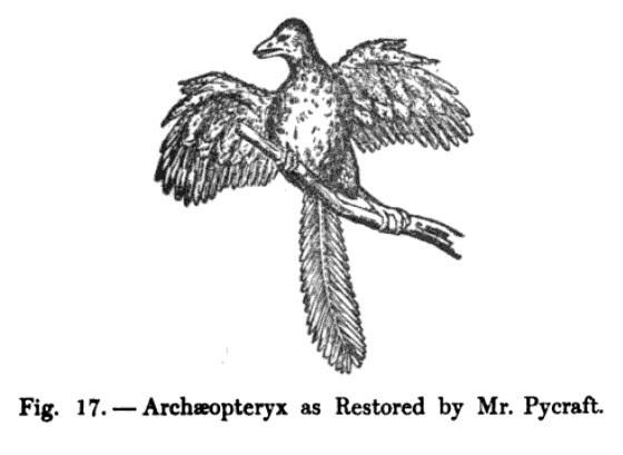 Mr. Pycraft's Archaeopteryx
