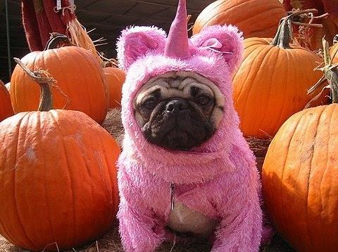 animal costumes, costume, cute, dog, funny, funny. pink unicorn