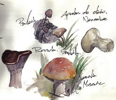 mushrooms study