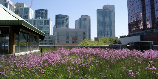 Using Green Roofs to Boost Biodiversity
