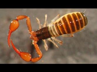 Top 10 de las nuevas especies encontradas durante 2014