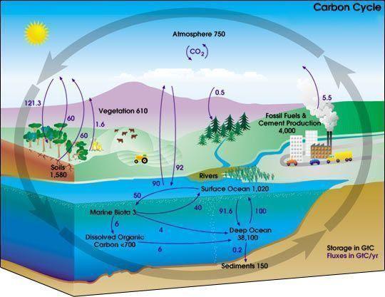 Esquema de los flujos del carbono
