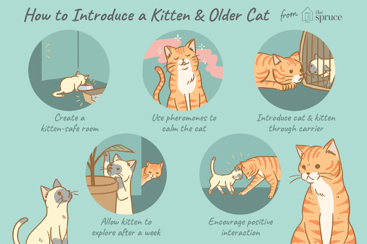 How to Introduce a New Kitten to an Older Cat