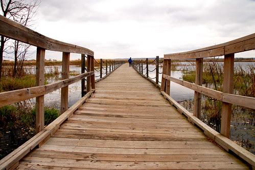 Horicon Boardwalk