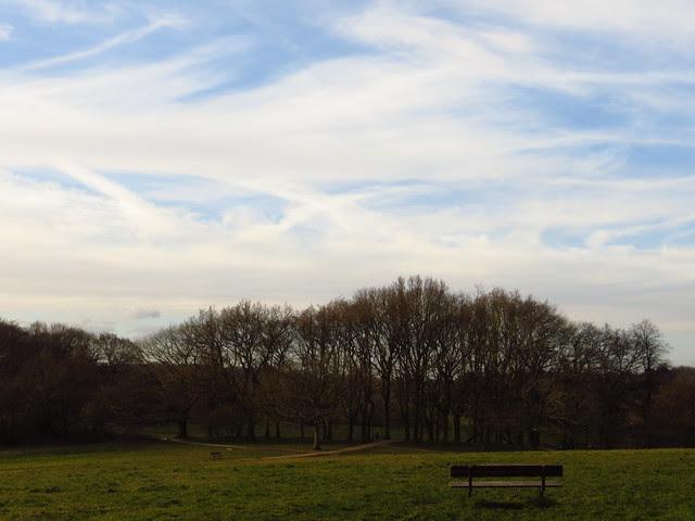 Parliament Hill Trees