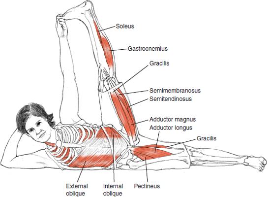 Anantasana Reclining Vishnu Couch Pose © Leslie Kaminoff's Yoga Anatomy  B E N E F I T S — Stretches the backs of the legs — Stretches the sides of the torso  — Tones the belly — Strengthens armpits and shoulder muscles — Improves the digestive system.  ❤ Yoga Inspiration Buy it here http://amzn.to/1ctMdtp http://on.fb.me/18hDKoD
