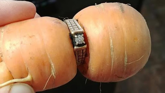 Lost diamond engagement ring surfaces wrapped around garden carrot