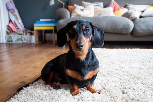 In the Doghouse: How to Create a Cosy Space for Your Dog