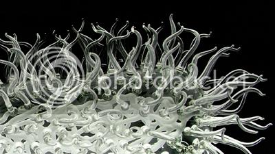 E. coli detail