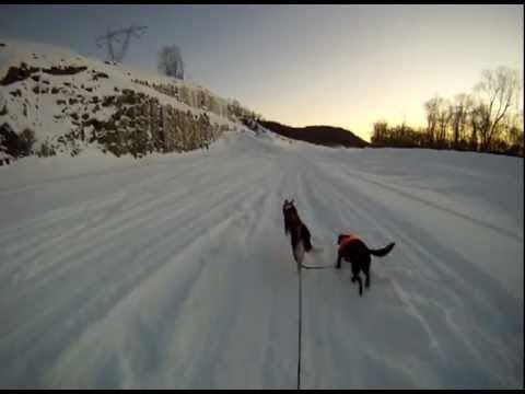 Le skijoring au Quebec