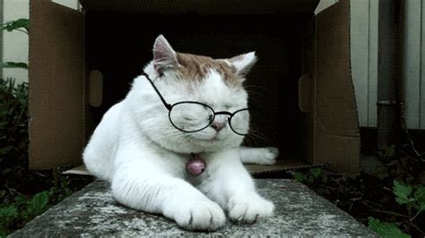 kumpulan gambar gif lucu edisi kucing unic