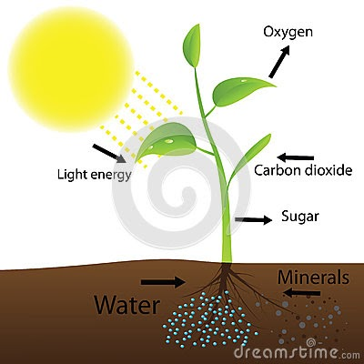 phtosynthesis projects Toggle navigation home articles briefings biographies media projects for faculty for admins  the term photosynthesis is used almost exclusively to designate one.