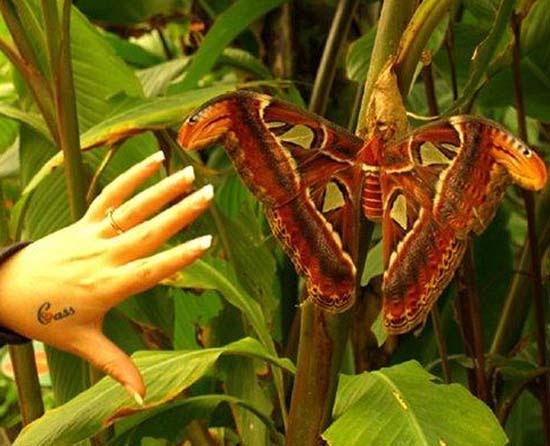 Τα 16 μεγαλύτερα έντομα στον κόσμο (10)