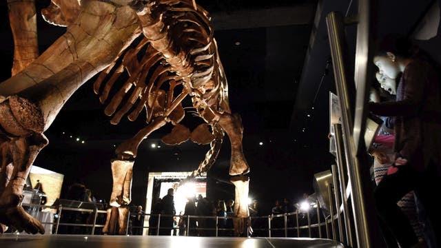 El Titanosaurio es tan grande que no entra entero en la galería del museo, por lo que su cuello y su cabeza sale por la puerta.