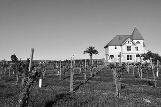 Concannon Vineyard - Old Vines